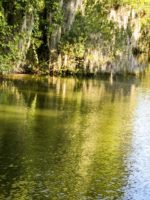 Water and Moss in Lake Placid Florida